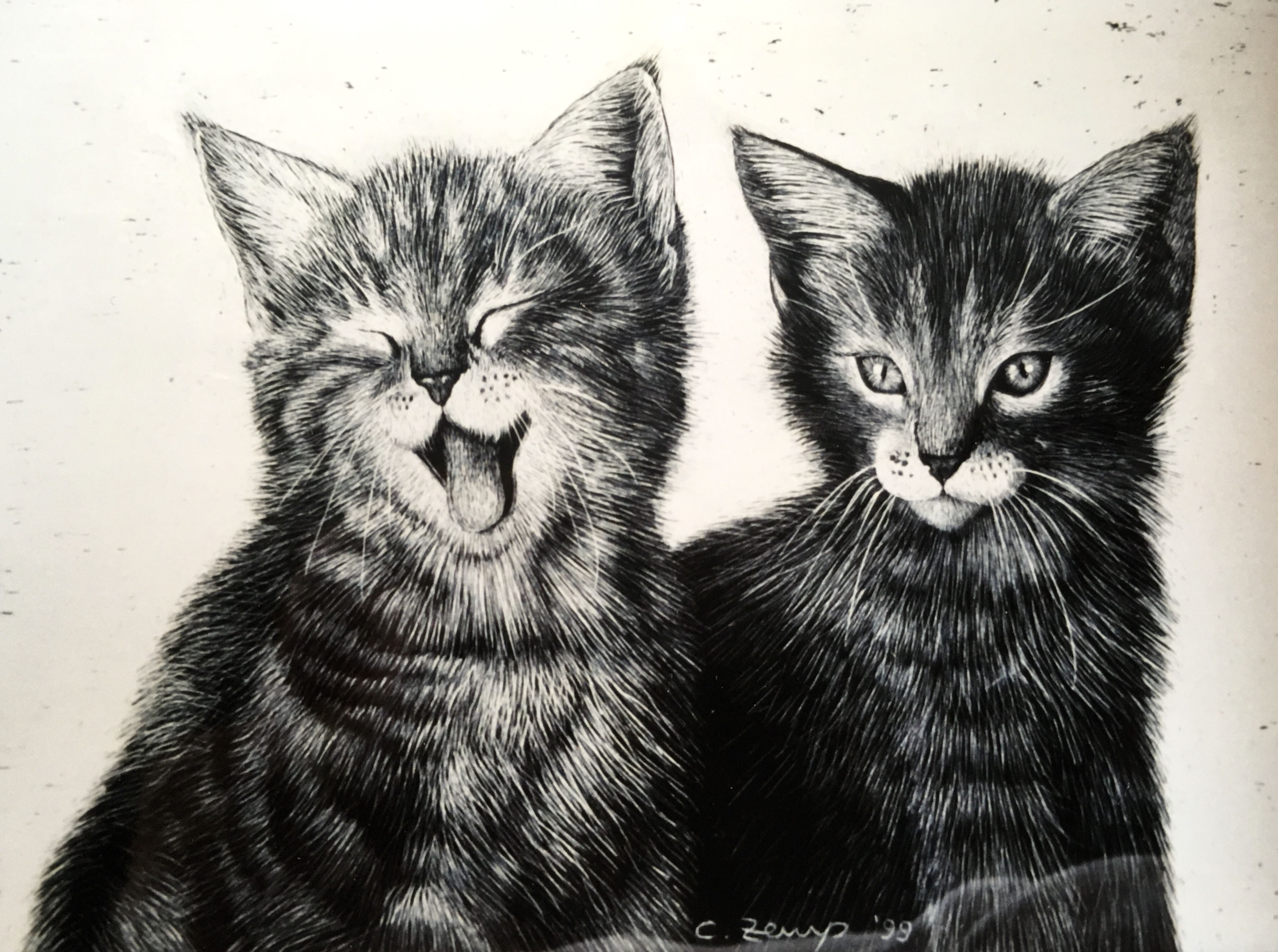 Young cats (verkauft / sold)