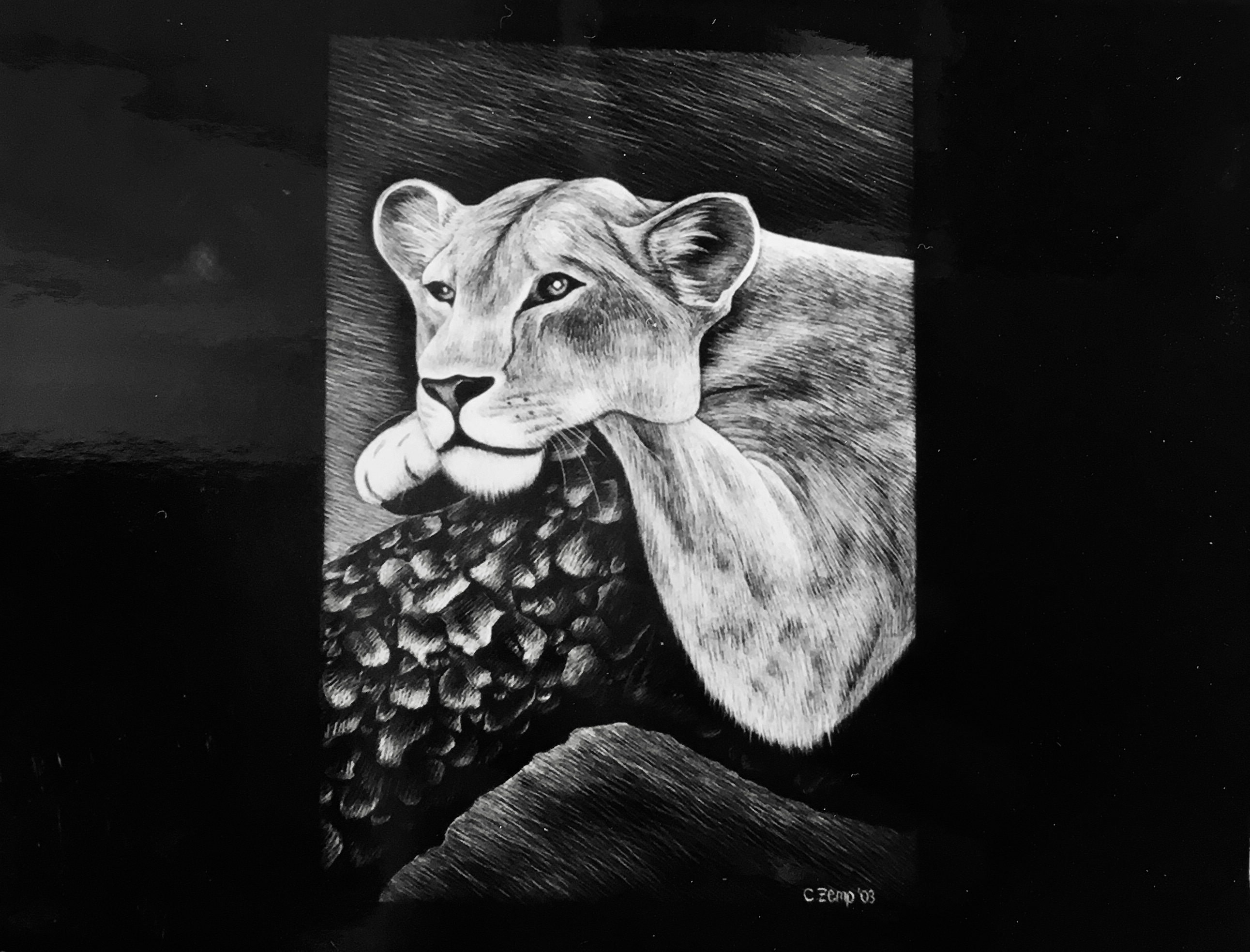 Tired Leopard (verkauft / sold)